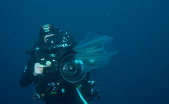 Les équipes de bluearth production spécialistes en matière de tournage de prise de vue sous marine